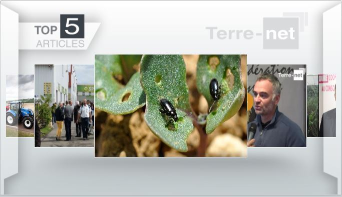 Top articles - New Holland T6, altises sur colza, Space au coeur de l'actualité sur Terre-net